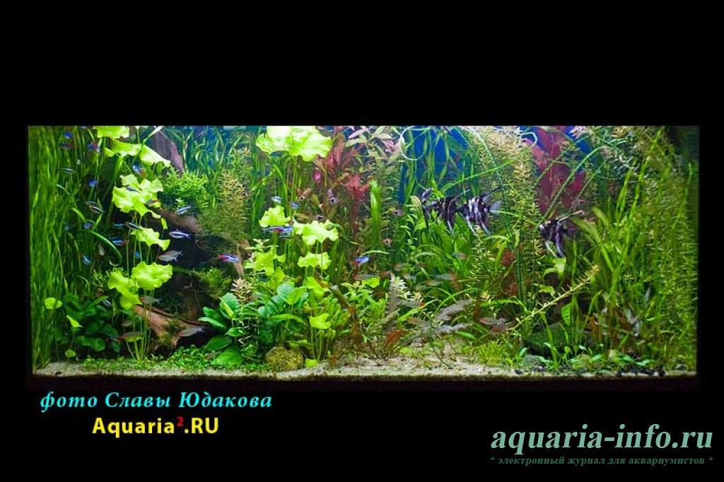 Садовая земля в аквариуме
