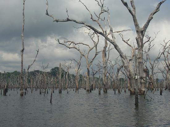 Мертвый лес в окрестностях плотины Бальбина