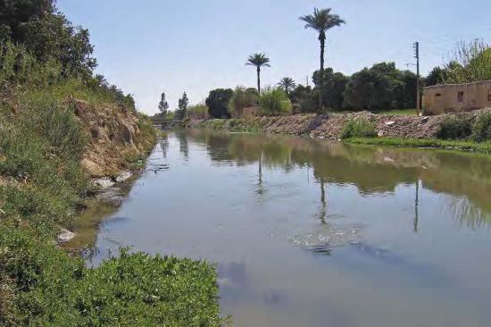 Haplochromis sp. Ismailia.