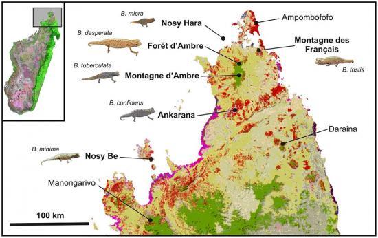 карта Мадагаскара, биотопы Brookesia spp.