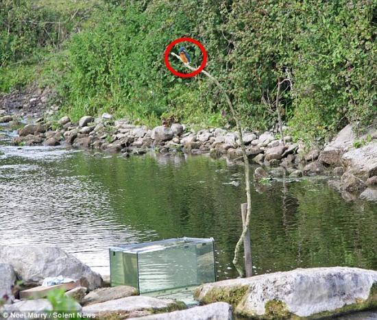 kingfisher-aquarium.jpg