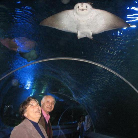 r_istanbul_aquarium.jpg