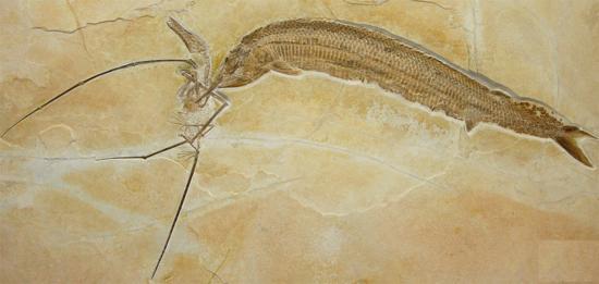 pterosaur-armored-fish_1.jpg